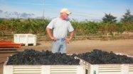 Steve inspecting the harvest.